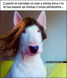 ★★★★★ Memes animados español latino: Un peinado para nada I➨ http://www.diverint.com/memes-animados-espanol-latino-peinado/ →  #memegeneratorenespañolgraciosos #memeschistososcortos #memesenespañolcomics #memesesespañol #vermemesgraciosos