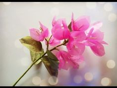 Bougainvillea From Tissue Paper - Craft Tutorial - YouTube