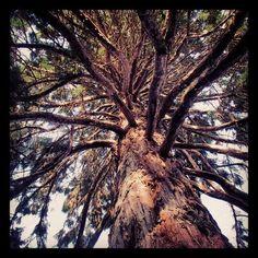 Exploring And Hiking In Point Defiance Park, Tacoma WA.... #travel, #adventuretravel, #Seattle  #Tacoma, #wa, #Washingtonstate, #northwest , #pacificnorthwest , #hiking, #biking, #camping, #kayaking, #health , #healthyliving , #healthylifestyle ,  #ExtraHyperActive