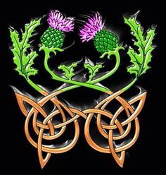 Thistle and knot