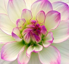 ensphere:    So Lovely Butchart Gardens Victoria by Ireena Eleonora Worthy on Flickr.