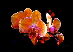 Orange Orchid Flowers Autumn Harvest Warm Colors by EclecticForest