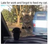Ideas To Draw Cute Animals. Funny Cat Photos Birthday beside Really Easy Cute Animals To Draw provided Funny Cat Photos Com opposite Cute Cartoon Animals Outline Funny Cat Photos, Meme Pictures, Funny Captions, Funny Cat Videos, Caption Pictures, Dog Photos, Funny Cats And Dogs, Funny Animals, Cute Animals