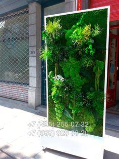 Зеленые фито-стены из плоского мха и растений