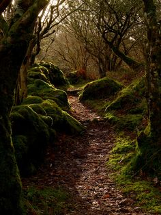 Enchanted Wood, Argyll, Scotland.