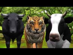 Animals Finger Family Nursery Rhymes Collection | Children Rhymes Tv