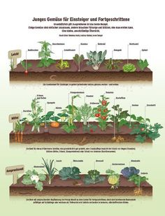 Garten: Gemüse richtig anbauen - Beobachter The Effective Pictures We Offer You About Vegetable Garden planters A quality picture can tell you many things. Plan Potager, Potager Garden, Garden Planters, Balcony Gardening, Diy Garden, Growing Plants, Growing Vegetables, Small Gardens, Outdoor Gardens