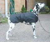 Free Sewing Patterns For Dog Coats