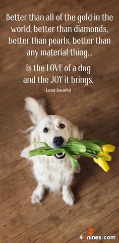 A dog will love you more than he loves himself. And that is so precious!!
