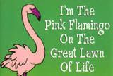 I'm the Pink Flamingo on the Great Lawn of Life-old school Flamingo Decor, Pink Flamingos, Flamingo Funny, Pink Bird, Everything Pink, My Spirit Animal, Bird Feathers, Beautiful Birds, Pretty In Pink