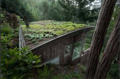 Cabin Design by Feldman Architecture, San Francisco. Green Roof Design by Jori Hook, Mill Valley