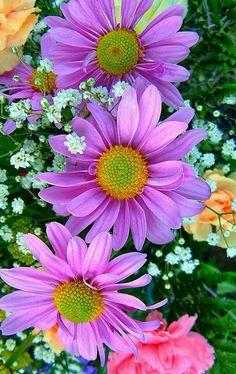 Daisies uploaded by Debra Hollingsworth on We Heart It Little Flowers, Summer Flowers, Pretty Flowers, Flowers Nature, Exotic Flowers, Wonderful Flowers, Flower Wallpaper, Watercolor Flowers, Beautiful Gardens