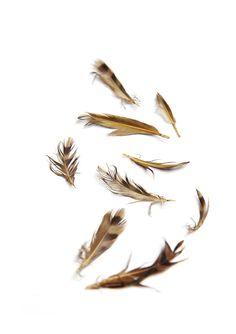flicker feathers (mary jo hoffman)