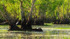 biodiversidad de fauna y flora salvaje