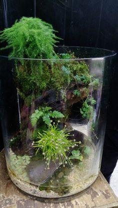 Aquarium Garden, Aquarium Terrarium, Planted Aquarium, Small Terrarium, Terrarium Plants, Succulent Terrarium, Ferns Garden, Moss Garden, Garden Pests