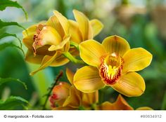 Bouquet of yellow cymbidium. Romantic Gif, Best Vpn, Comprehension Activities, Disney And More, Flower Images, Science And Nature, Holidays And Events, Yellow Flowers, Preschool Activities