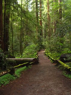 my favorite forest (Armstrong Redwood, California)