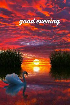 141 Best Good Evening Images In 2019 Buen Dia Bonjour Good Morning