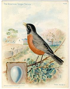 Beautiful Large Bird and Egg Graphic - Robin - The Graphics Fairy