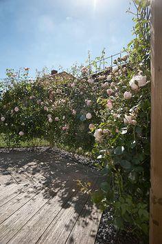 Needs translation. Rose Trellis, Diy Trellis, Garden Trellis, Garden Gates, Back Gardens, Outdoor Gardens, Porch Garden, Diy Pergola, Yard Art