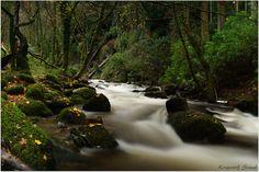 Forest Stream. - Ireland , Killarney Co.Kerry , Torc River .