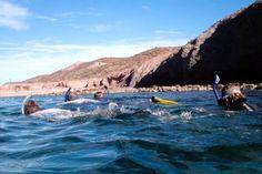 Un recorrido de snorkel a mediodía para lograr la mayor visibilidad de especies