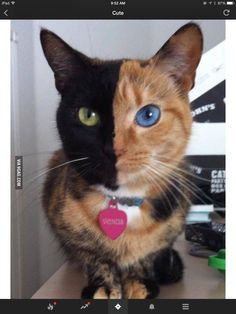 this cat is so beautiful!!!!!