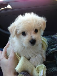 10 Pups That Want To Be Your Valentine! (Photos) | Babble
