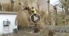 Zeyada Hi Fankari Mar Raha Tha   #Videos #Animated #Funny #Amazing  #Animals #Awesome #comedy #Crazy #Car crashes #Stunt #Prank #Horror #Robbery #humor #Informative
