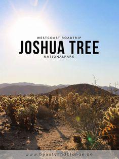 The Beauty and the Blonde: Westcoast USA Roadtrip Joshua Tree Nationalpark