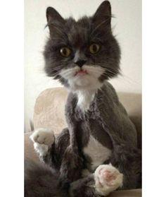 New Hair Cut ! Poor Kitty !