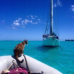 instagram-liz-clark-tour-du-monde-chat-6