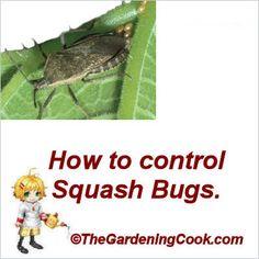 Veggie Gardening Tips :: Carol Speake - The Gardening Cook's clipboard on Hometalk