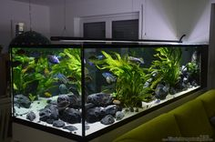 10 Tips on Designing a Freshwater Nature Aquarium Biotope Aquarium, Discus Aquarium, Aquarium Kit, Aquarium Design, Aquarium Ideas, Aquarium Store, Live Aquarium, Planted Aquarium, Small Fish Tanks