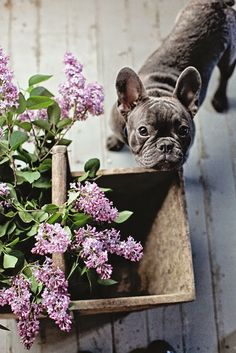 Dreamy Whites~lilacs - greys
