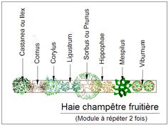 Kit de haie champêtre fruitière Garden Plants, House Plants, Permaculture, Garden Design, How To Plan, Human Drawing, Pins, Annie, Gardening
