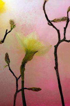 Carmen Moise painting 'heavenly light' colours remind me of vintage Kimono I have seen.