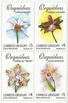 Uruguay, Orquideas (2000)
