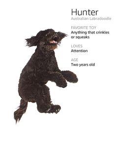Image of a dog named Hunter