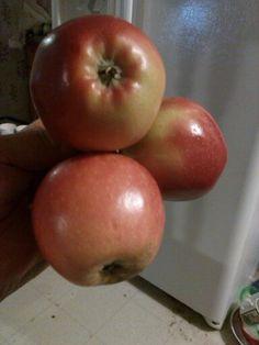 Mis manzanas