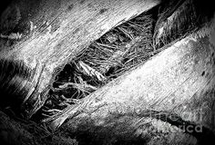Textures - photograph by Clare Bevan. Fine art prints and posters for sale.  #clarebevan #abstractphotography #blackandwhitephotography