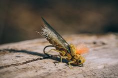 august fly