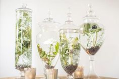 Craft tiny gardens with these favorite terrarium plants.
