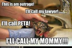 This is am outrage! - LOLcats is the best place to find and submit funny cat memes and other silly cat materials to share with the world. We find the funny cats that make you LOL so that you don't have to. Funny Cat Memes, Funny Cats, Funny Animals, Angry Animals, Hilarious, Silly Cats, Cats And Kittens, Crazy Cat Lady, Crazy Cats