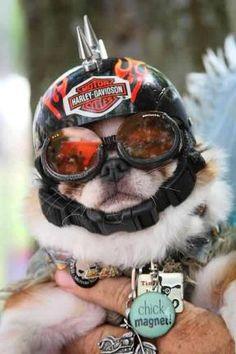 059cfa624f 111 Best Biker Dogs images