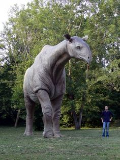 Paraceratherium (aka Baluchitherium and Indricotherium), a gigantic hornless long-necked rhinoceros from prehistory that was the largest land mammal ever known to have existed on planet Earth. Prehistoric World, Prehistoric Creatures, Dinosaur Fossils, Dinosaur Art, Extinct Animals, Jurassic Park, T Rex, Animal Kingdom, Aliens