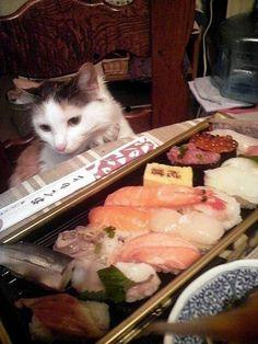 ネコと寿司5