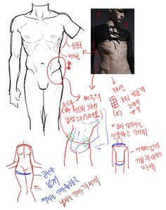 Exceptional Drawing The Human Figure Ideas. Staggering Drawing The Human Figure Ideas. Body Reference Drawing, Human Figure Drawing, Guy Drawing, Art Reference Poses, Anatomy Reference, Anatomy Sketches, Body Sketches, Anatomy Drawing, Anatomy Art