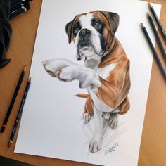 Pencil Drawing Color dog color pencil drawing - Dog drawings / Dog Art : Every artist chooses their favourite pets as one of their subjects while creating artworks. We have seen the dog paintings, now go through our collection of dog colour pencil 3d Drawings, Realistic Drawings, Animal Drawings, Pencil Drawings, Cãezinhos Bulldog, Color Pencil Art, Dog Portraits, Animal Paintings, Dog Art