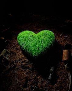 Grass - Sustainable: Sustainable
